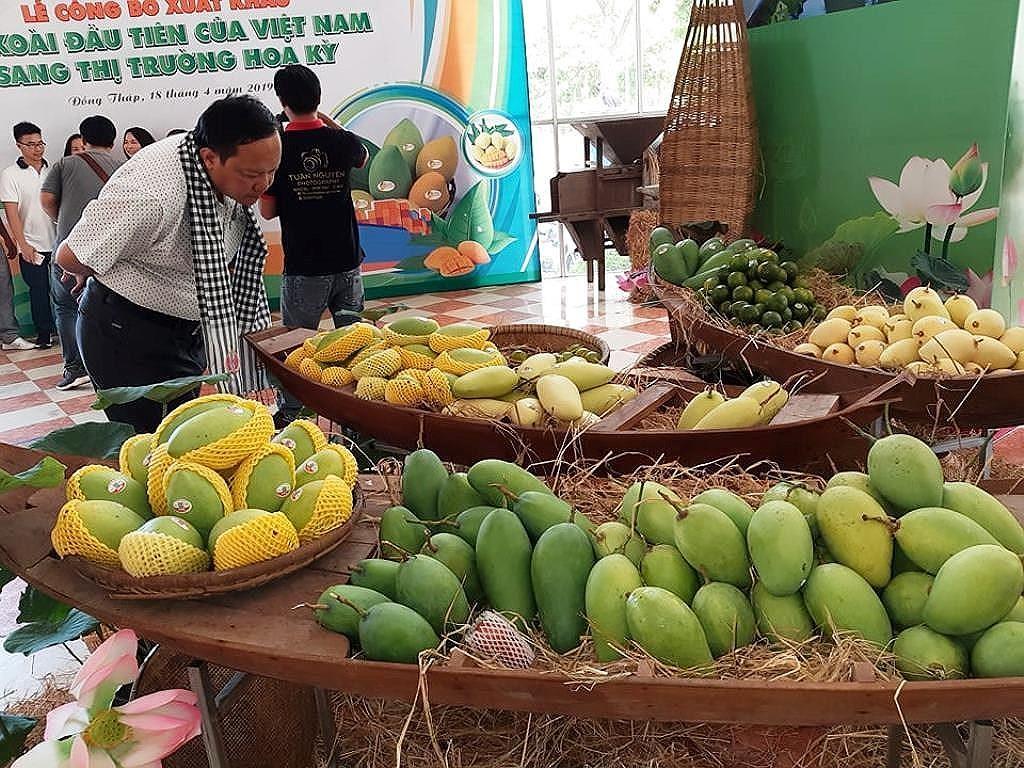 Xoài cát Hòa Lộc, xoài cát chu và xoài tượng là 3 giống xoài Việt được xuất khẩu sang Mỹ lần đầu tiên vào tháng 4/2019
