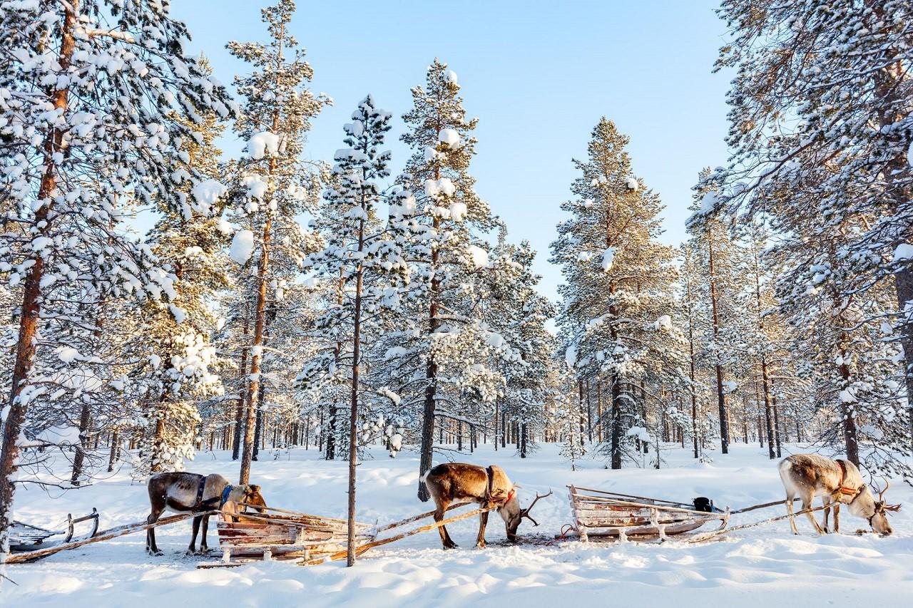 Nhiều năm liền Phần Lan được xếp hạng là quốc gia hạnh phúc nhất