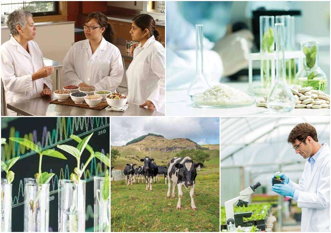 Du học canada ngành nông nghiệp và thực phẩm