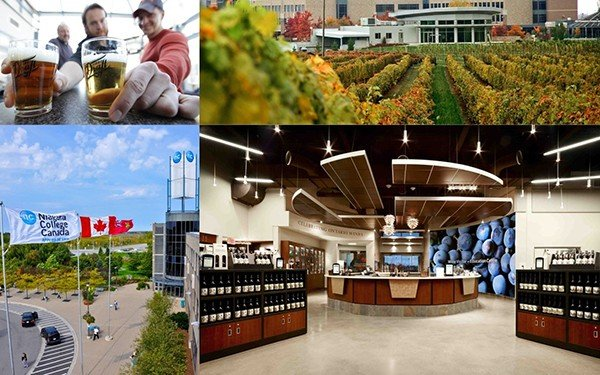 Du học Canada ngành sản xuất bia rượu