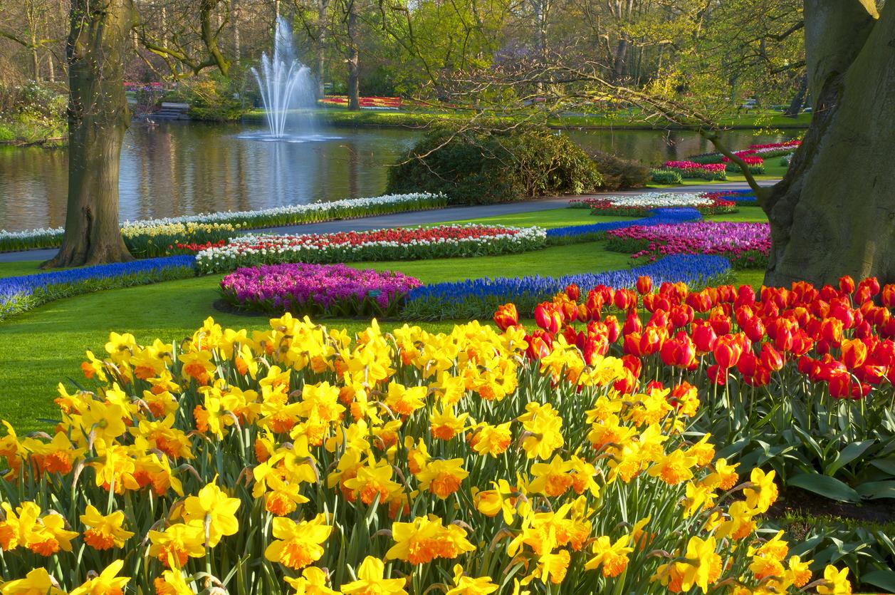 Những khu vườn đẹp không thể thiếu bàn tay của người làm vườn giỏi