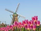 Du học sinh quốc tế nói gì về Hà Lan?