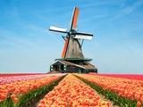 Hiện thực hóa ước mơ học tập tại Đại học Tilburg lừng danh nhờ chương trình học bổng hấp dẫn
