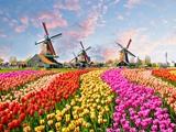 Vì sao chọn du học Hà Lan?
