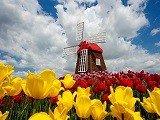 Du học Hà Lan – Quốc gia có hệ thống giáo dục đại học xuất sắc thế giới