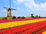 Du học Hà Lan: giữa ngàn lựa chọn, lộ trình nào hiệu quả cho bạn?