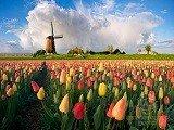 Du học Hà Lan – Top 3 quốc gia có nền giáo dục tốt nhất thế giới