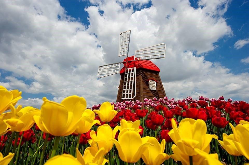 Du học Hà Lan – Quốc gia có hệ thống giáo dục đại học xuất sắc thế giới 1