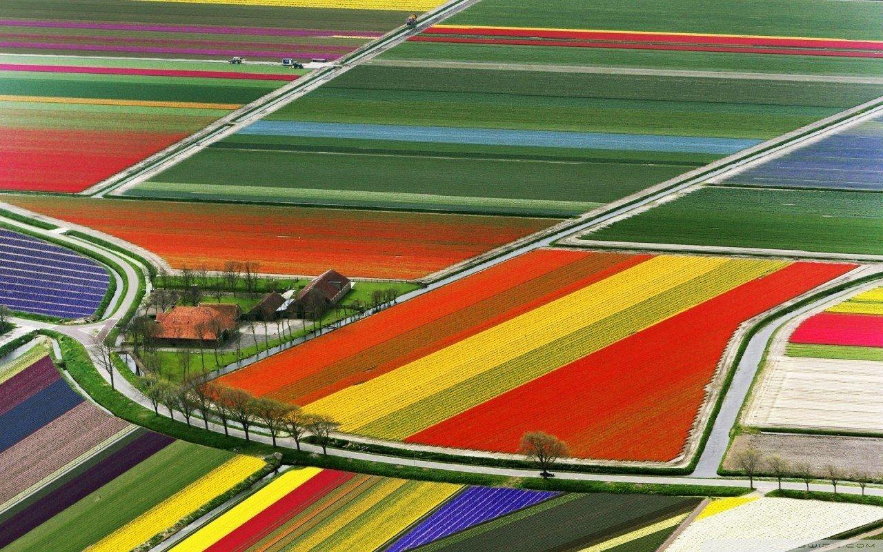 Du học Hà Lan – Quốc gia có hệ thống giáo dục đại học xuất sắc thế giới 3