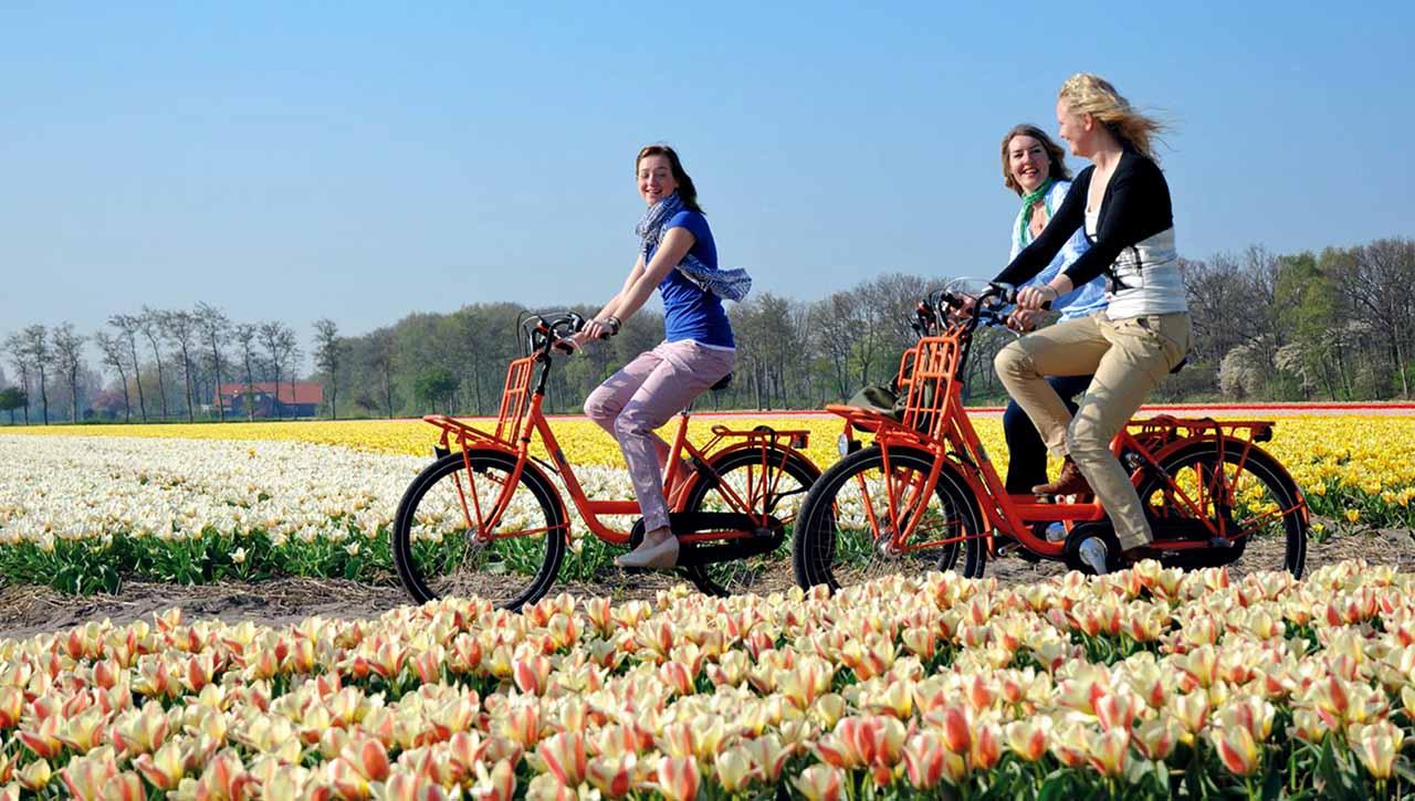 Ngày nay Giáo dục Hà Lan đã thu hút trên 81.700 sinh viên Quốc tế đang theo học các chương trình từ Cử nhân đến Thạc sĩ. Các ngành học nổi trội tại Hà Lan gồm có: Logistics, Du lịch dịch vụ, kinh doanh… được đào tạo bởi nhiều trường Đại học Khoa học Ứng dụng (UAS) nổi bật như Đại học HAN, ĐH Stenden, ĐH Tilburg…