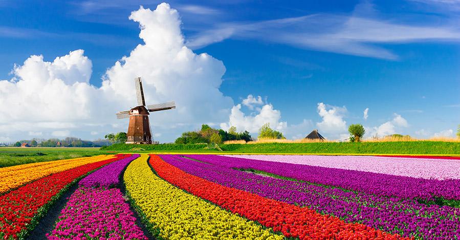 Hà Lan - Đất nước của những cánh đồng hoa mỗi năm thu hút hàng chục ngàn sinh viên quốc tế
