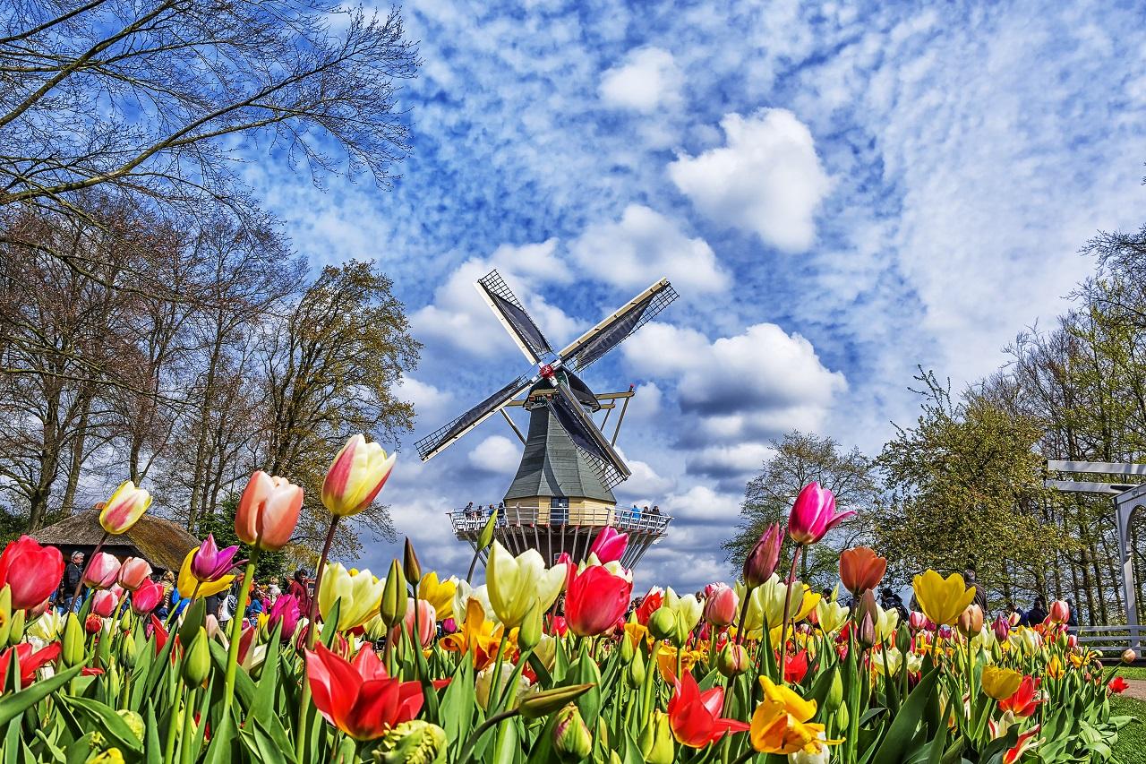 """Hà Lan vẫn là """"vùng đất hứa"""" cho những ước mơ du học!"""