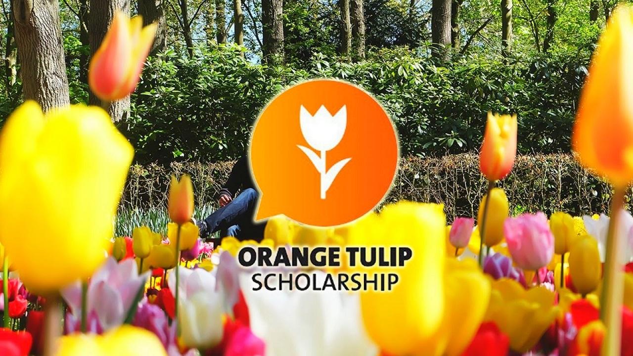 Học bổng Orange Tulip giúp giảm đáng kể chi phí du học Hà Lan