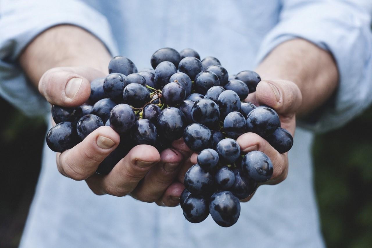 New Zealand là điểm đến lý tưởng để học ngành nông nghiệp