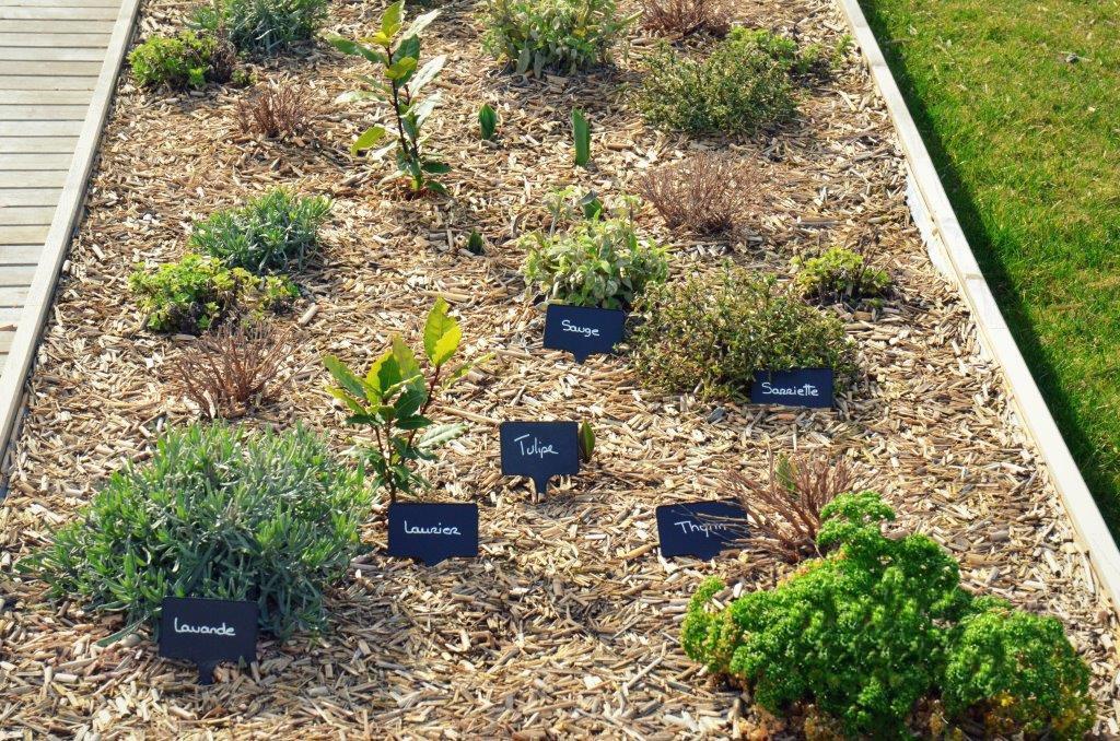 Vườn rau ở Le Cordon Bleu Paris dành cho sinh viên nghiên cứu rau củ, thảo mộc
