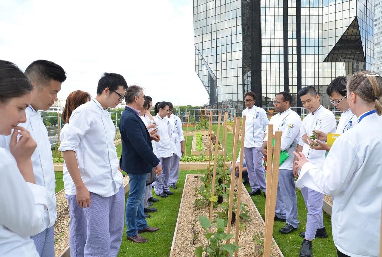 Khu vực trồng rau sạch rộng 800m2 trên sân thượng tòa nhà
