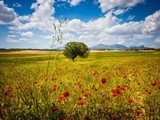 Murcia – Vùng đất thần tiên không ai có thể chối từ!