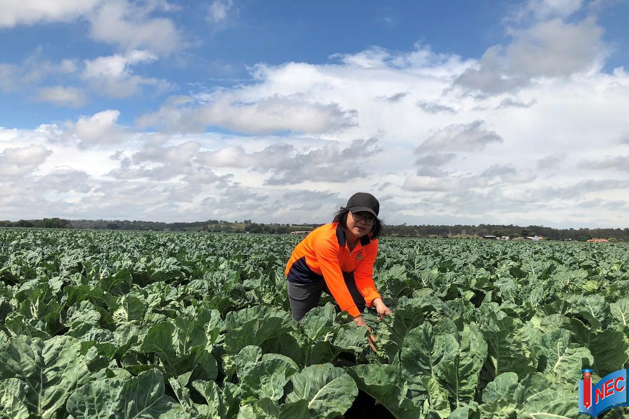 Du học Úc ngành nông nghiệp từ góc nhìn của cựu sinh viên