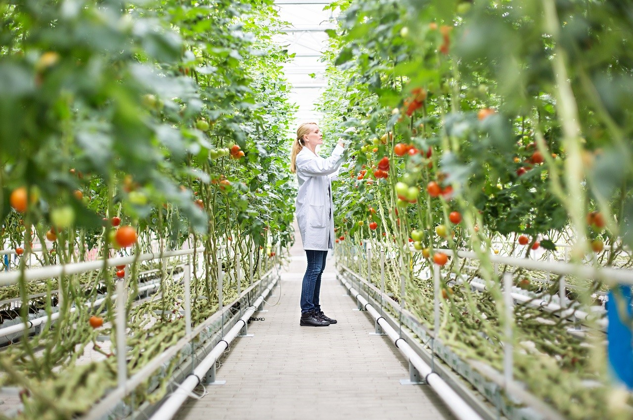 Thực tập 12 tuần khi du học Úc ngành nông nghiệp tại Đại học La Trobe