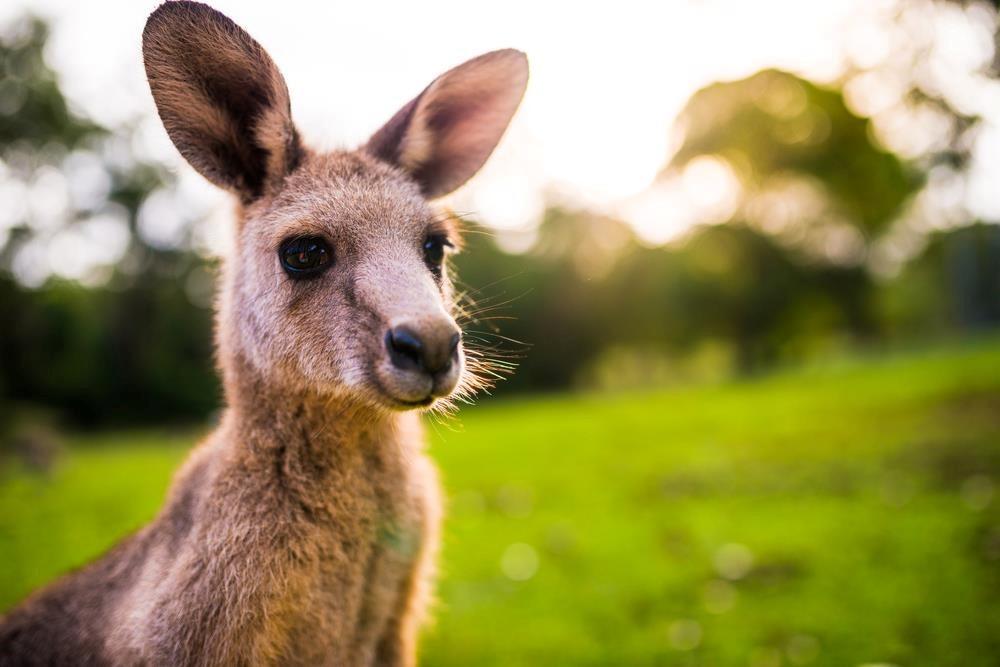 Điều kiện du học Úc có khó không? Ảnh: Shutterstock