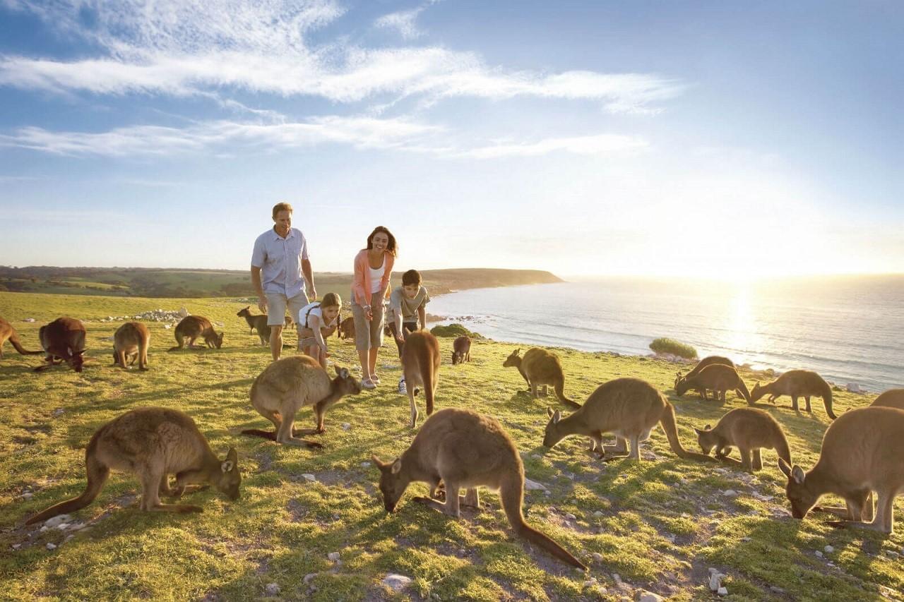Chính sách việc làm sau tốt nghiệp mới bang Nam Úc