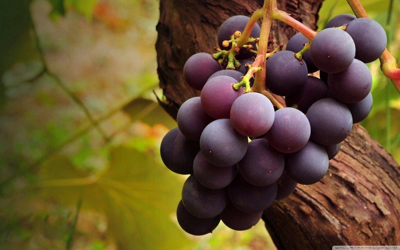 Hái trái cây là mộ trong những việc làm thời vụ được ưa chuộng