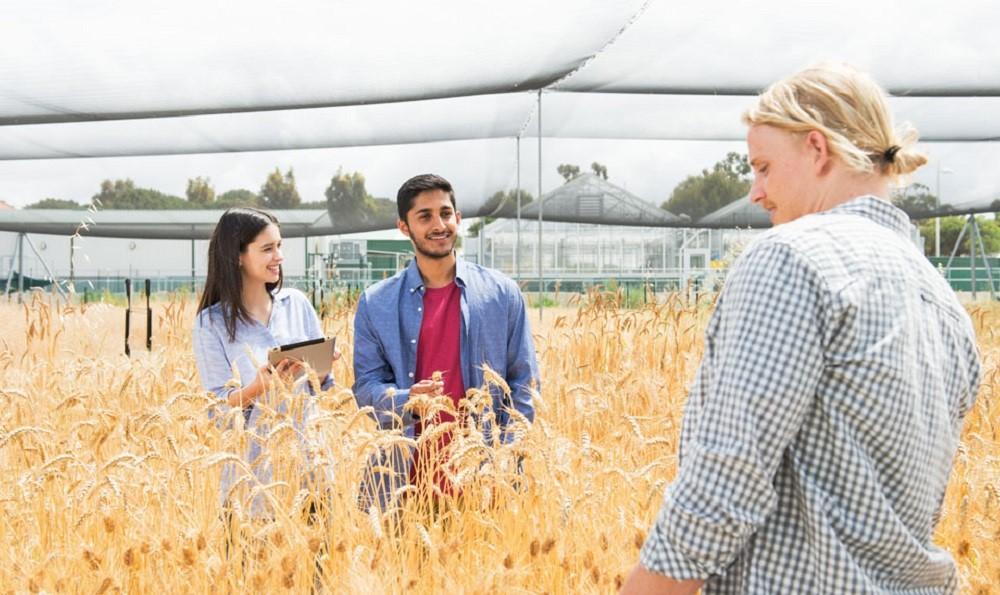 Học bổng du học Úc ngành nông nghiệp đến 100%