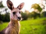 Điều kiện du học Úc có khó không?