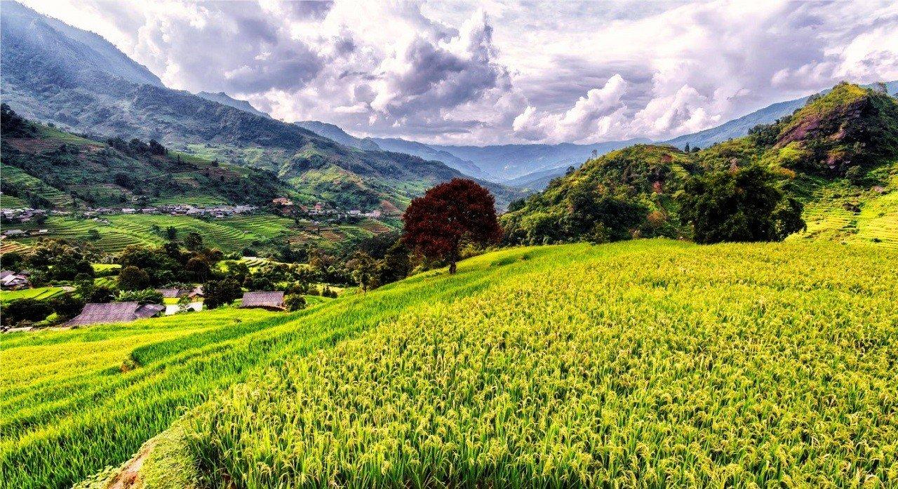 Cơ hội phát triển nghề nghiêp rộng mở không chỉ tại Việt Nam mà còn thế giới