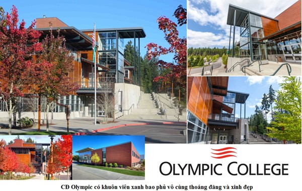 olympic-my