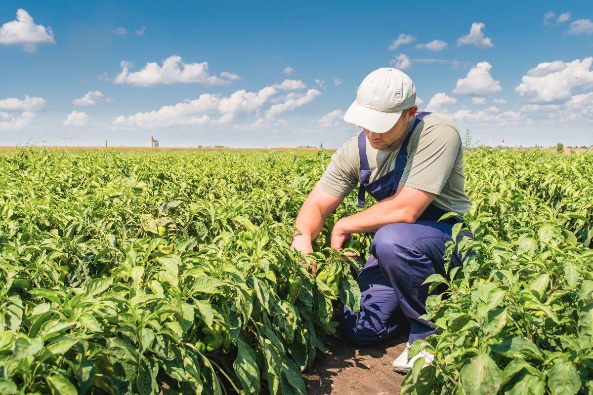 Lao động có tay nghề và kinh nghiệm trong lĩnh vực nông nghiệp được chào đón tại Canada