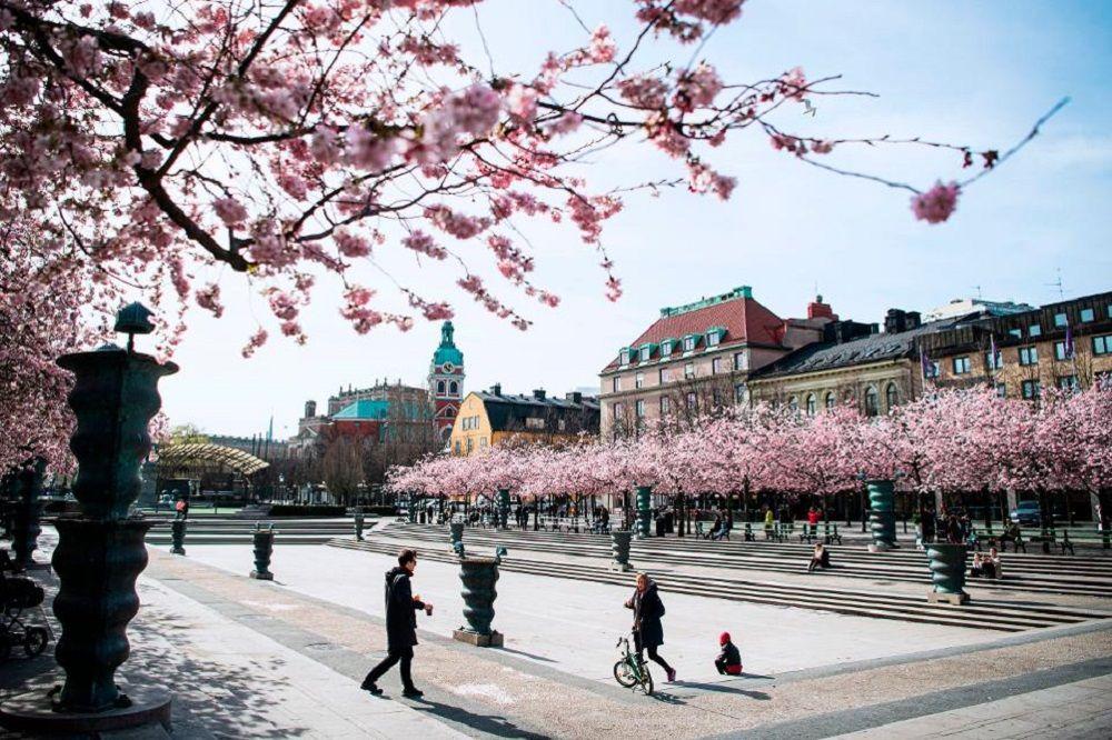 Sức sống mùa xuân tràn ngập Thụy Điển