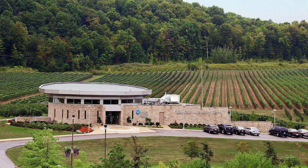 Vườn nho rộng lớn làm nguyên liệu phục vụ việc giảng dạy và nghiên cứu về rượu vang